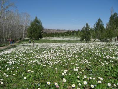 El parque de La Grajera con su césped lleno de florecillas en el comienzo de la primavera de 2007