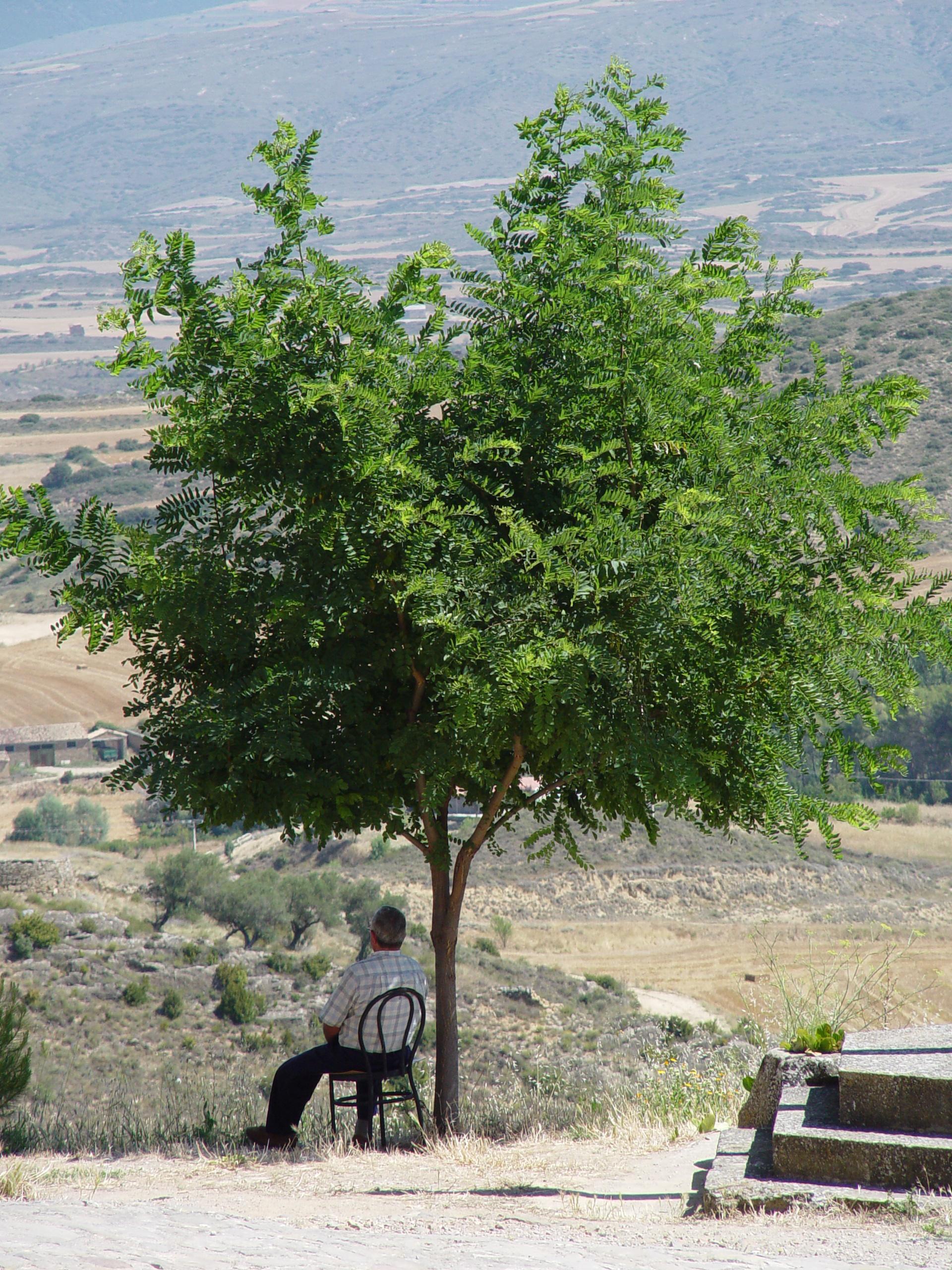 A la sombra de un rbol fotos de la foto del verano for Arboles sombra jardin