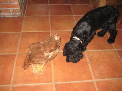 Troski y su amiga gallina