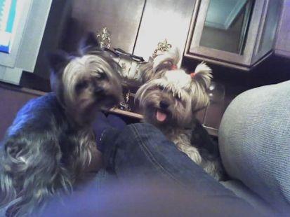 Tuno y Bety