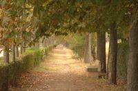 Paseo de la Carrera en otoño- Sto. Domingo de la Calzada