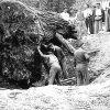 El tronco de la famosa sequoia de Valgañón