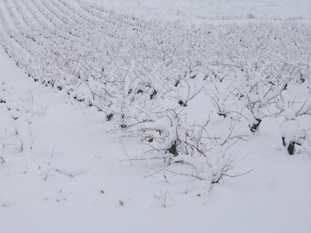 nieve San Asensio
