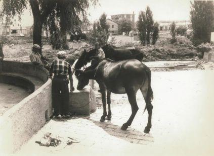 Abrevando en la fuente de El Villar