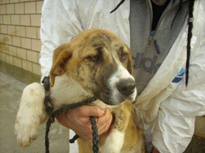 Animales Rioja - Cachorros en adopción