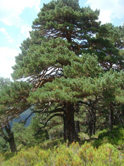 Resultado de imagen de árboles y arbustos