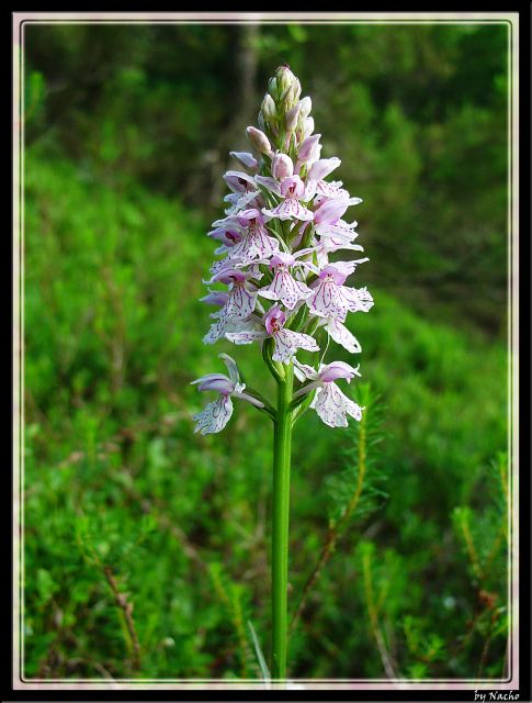Flores de Montaña