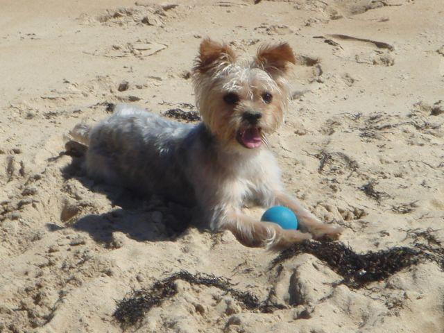 Toy en la playa