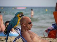 Con el loro en la playa
