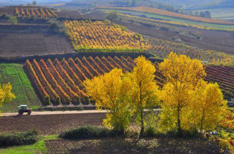 Entre viñas
