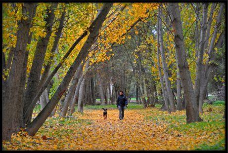 Paseo otoñal por el parque del Ebro