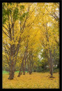 Oro en el parque del Ebro
