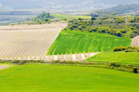 Campos de Rioja