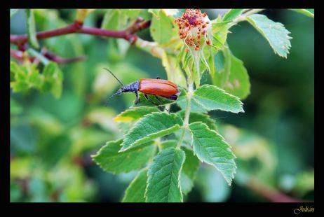 Naturaleza en pequeño