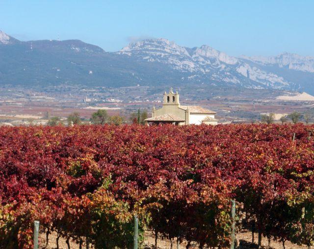 Viñedos de la La Rioja
