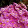 Flores puntiagudas