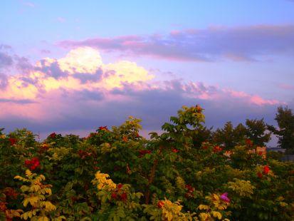 Vista desde La Ribera (logroño)