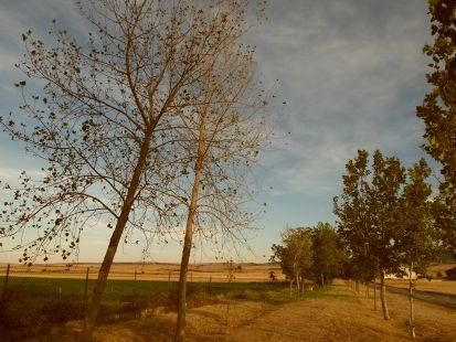 Carretera de Gallinero