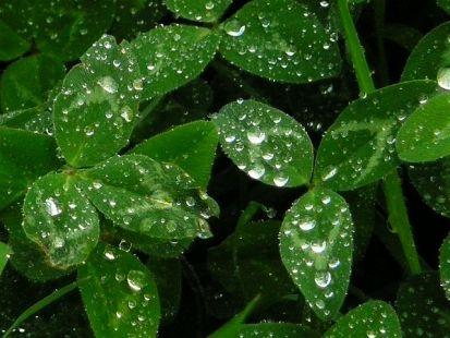 Tréboles tras la lluvia en el paseo de Los Molinos
