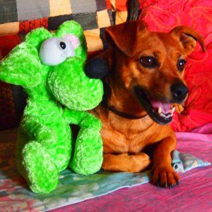 Macla y su mascota