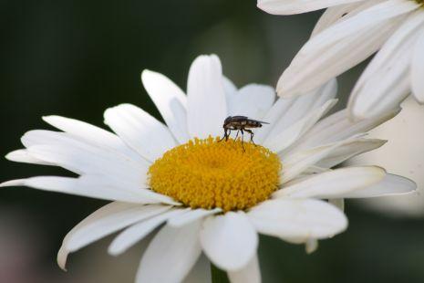 cuidadin con la abeja