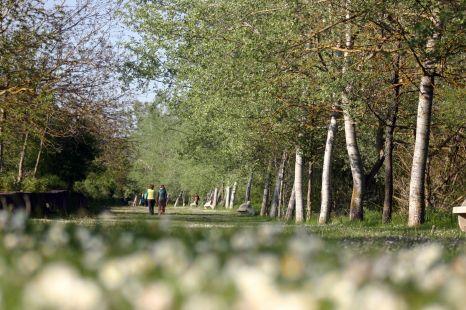 Paseo por la ribera del Oja (Ojacastro)
