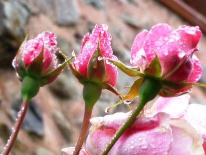 Amanecer florido en Ojacastro