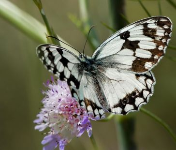 mariposa 5