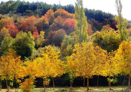 Sinfonia de colores en Ojcastro