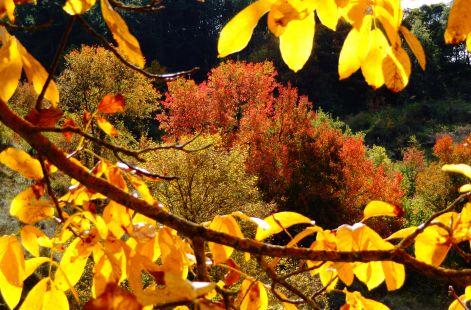 Colores de otoño en Ojastros