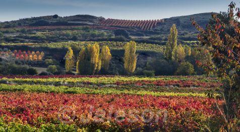 Otoño en la Rioja