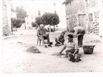 Limpiando garbanzos en Sorzano
