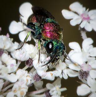 Insecto  carganndo 2