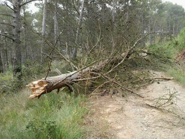 Un árbol caído en el camino