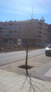 Aparcamiento para árboles
