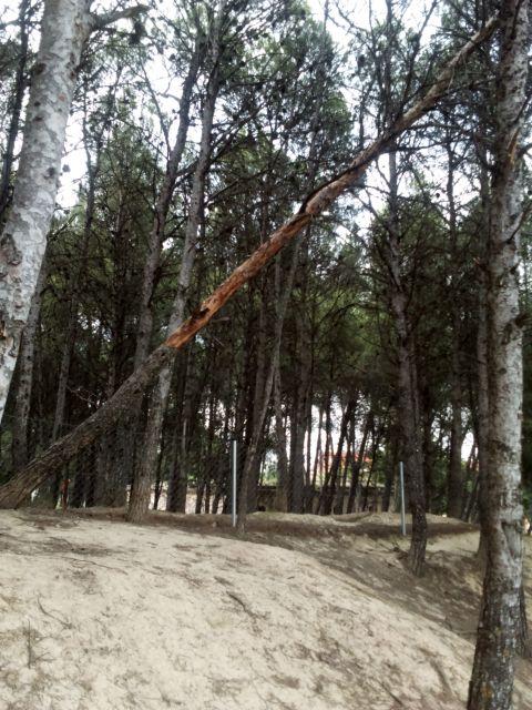árbol a punto de caer
