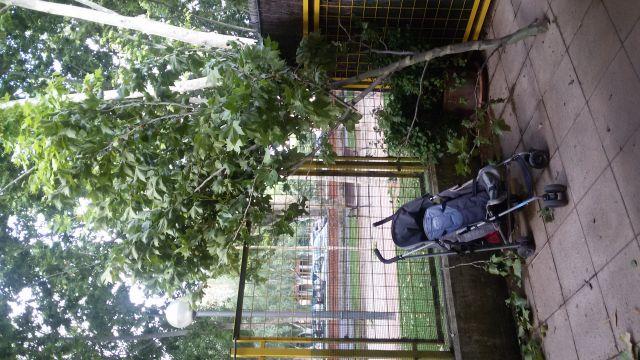 Árboles caídos en Guardería Carrusel